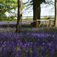 Bluebells at Hodsock Priory & Lincoln