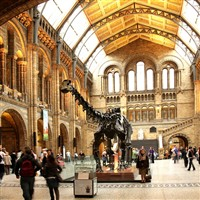 Legoland & London's Natural History Museum